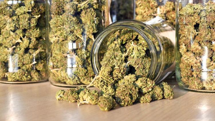 a28ec34e-dfd8-4438-b210-0cefdfa1cba5-large16x9_Marijuana